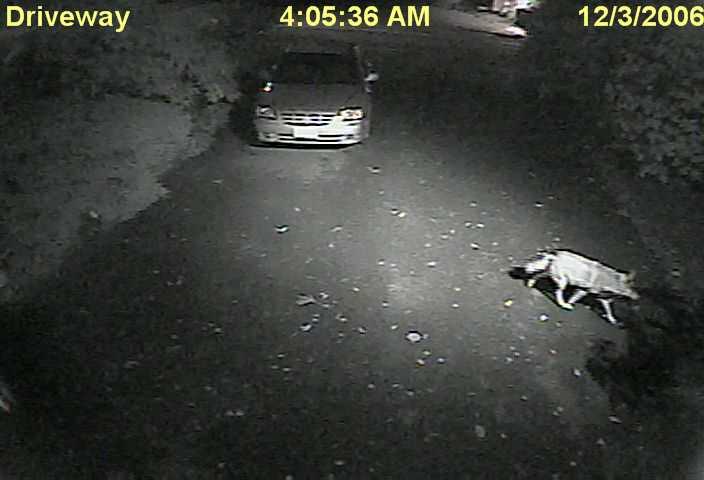 driveway_2006-12-03_04-05-36.jpg