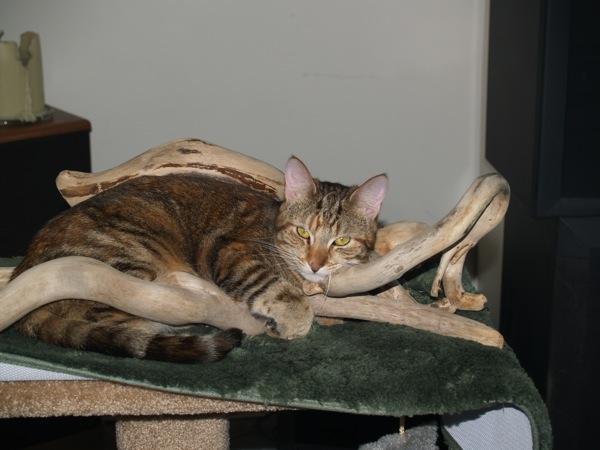Flitter sleeps in driftwood