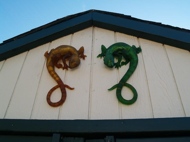 lizards-1.JPG